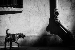 Paris (tomabenz) Tags: france sony a7rm2 noir blanc streetshot bw shadowplay urban shadow street photography dog monochrome noiretblanc urbanexplorer zeiss streetview black white europe paris bnw blackandwhite sonya7rm2 streetphotography