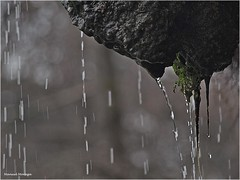 Agua (Manuel Moraga) Tags: manuelmoraga agua chorro macro bokeh parquedelretiro madrid españa