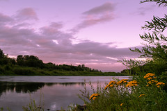 turning violet (jillian rain snyder) Tags: dusk sunset park nature landscape trees pnw oregon mintobrown salem pacificnorthwest travel river willamette water clouds sky reflection natural flowers