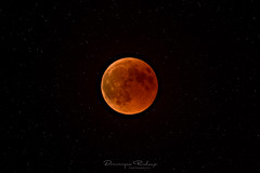 T O T A L • E C L I P S E (Dominique Richeux Photography) Tags: lune lunerouge lunedesang pleinelune moon mooneclipse redmoon fullmoon bloodmoon eclipse eclipselunaire lunareclipse night nightshot nightscape nightpic nightview nightphoto bynight galaxy planet planete astrophoto astronomie astropicture astro