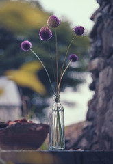 Allium Flowers in Vase (shawn~white) Tags: allium dreamy enchanting floral flower glass harmonious nostalgia purple reminisce romantic serenity stilllife vase vintage violet