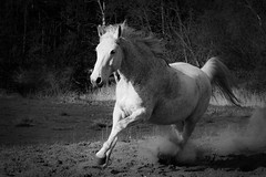 Riding the Light (lux verum) Tags: riding light reiten licht horse pferd monochrome bw schwarzweis panasonic lumix olympus dmcg81 g81 mzuiko mzuiko12100mm lux verum luxverum panasonicdmcg81 olympusm12100mmf40 panasonicg81