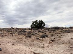 pfpd062park (invisiblecompany) Tags: 2018 travel usa nationalpark arizona petrifiedforest