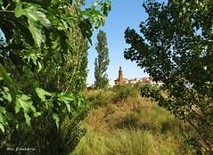 Tudelilla..( La Rioja) (kirru11) Tags: paseo pueblo verdes campo árboles iglesia casas tudelilla larioja españa kirru11 anaechebarria canonpowershot