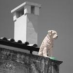Le chien sur toit thumbnail