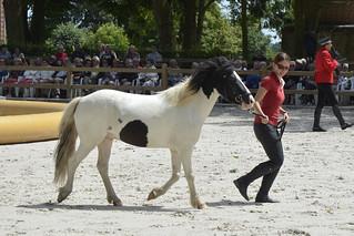 2018.06.21.055 HARAS du PIN - Spectacle équestre, présentation des chevaux
