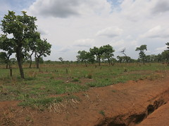 IMG_0625 (FAO Forestry) Tags: fao un uganda refugees unhcr world bank environment energy south sudan woodfuel forestry