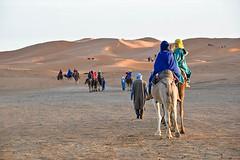 Riding Camels, Sahara at Sunset (meg21210) Tags: sahara sunset morocco camels people ridingcamels erfoud tuareg dromedaire dromedary dromedaries camel animals dunes