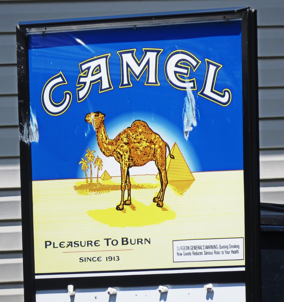 The World's Best Photos of camel and cancer - Flickr Hive Mind