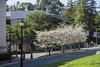 Spring Moffitt (Nfielden) Tags: moffitt library ucberkeley berkeley university librariesandlibrarians libraries liblibs academic architecture california