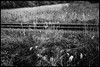 Senseki Line, JR, Miyagi-ken (GioMagPhotographer) Tags: train ricohgr miyagiken eastofthesun landscape japanproject tohoku japan