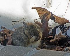 I'm Hiding (Mark...L) Tags: bunny rabbit baby