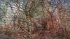 20180402_163720_i (wos---art) Tags: bildschichten wald sträucher bäume äste fusweg wildwuchs natur natürlich gewachsen