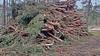 20180331_172359 (wos---art) Tags: bildschichten schneebruch sturmbruch äste bäume aufräumen haufen