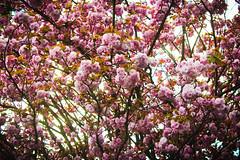 IMG_1301 (şbnm) Tags: canon canon700d flower sky blue green istanbul people color sunset light sea cloud night city building tree road macro