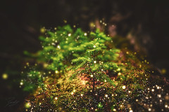 Tiny But Full of Life (Randy • R) Tags: a6000 activity adventure amazing america beautiful beauty blast bright effect environment fineart gradient hiker hiking ilce6000 image landscape light lightbeam luminescence luminosity luminous mountain natural nature nice outdoor outdoors outside path photo photographer photography phototropism pic picture plasmaball pretty randall sony spring tree trees wood