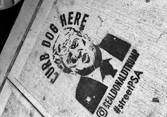 Curb Dog Here Street PSA (Alexander H.M. Cascone [insta @cascones]) Tags: art protest nyc trump new york city usa america street curb piss dog here stencil paint graffitti vandalism public brooklyn relieve resistance parking cement black white bw williamsburg
