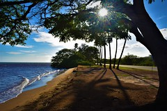 Kakahaia Park (thomasgorman1) Tags: trees beach shore ocean sea nikon park outdoors island hawaii molokai kakahaia road shadows sunlight