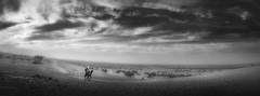 Lawrence of Thar .. (tchakladerphotography) Tags: desert dunes india khurivillage rajasthan thar blackwhite bw panorama evening atmosphere mood sanddunes scenic sand landscape jaisalmerdesert khurisanddunes dry dune sky outdoor travel camel man nature