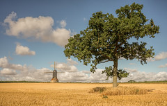 After the harvest (grbush) Tags: summer windmill stevingtonwindmill stevington bedfordshire countryside rural farm farming agriculture wheat harvest postmill tree lonetree clouds bluesky field sonyilce7 landscape