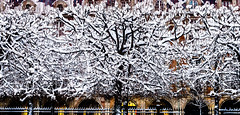 WhiteTape.jpg (Klaus Ressmann) Tags: klaus ressmann omd em1 abstract fparis france placedevoges snow winter branches design flcabsnat flicvarious trees klausressmann omdem1