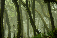 Green Eden (coastwalker) Tags: eden lagomera nationalpark nature green forest fog coastwalker