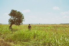 Untitled (marcus.greco) Tags: selfportrait portrait tree nature sky colors man green grass