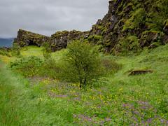 _7122621.jpg (Roger Kiel) Tags: iceland gullfoss waterfalls gct geysir horses akureyri akureyritoreykjavikflight thingvellirnationalpark selfoss
