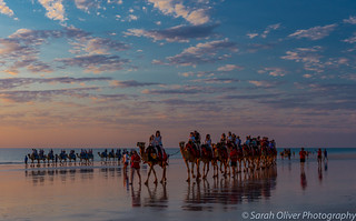 Sunset camel safari rides
