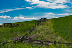 Fences and Flowers (amarilloladi) Tags: fence palouse flora flowers 7dwf fences fencedfriday hff wildflowers blueskies country crops pacificnorthwest palouseregion agriculture clouds washington