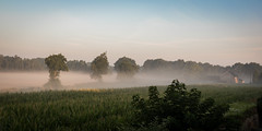 In the morning (ericbeaume) Tags: nikon d5500 sigma paysage landscapes trees naturallight nature campagne country sky ciel brume mist corn maïs field house beautiful hollande netherlands paysbas travel ericbeaume