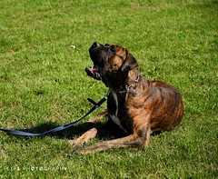 (flipsphotography) Tags: hund animal dog saupacker animals tiere hunde dogs