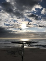 GOOD EARLY MORNING ABERDEEN BEACH (eefzed) Tags: landscape birds morning waves sea nature sun northsea beach sunrise uk scotland aberdeen aberdeenscotland aberdeenbeach