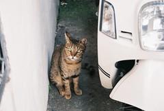 (YL.H) Tags: canon 500n agfa film analog cat taiwan 貓 底片 大溪