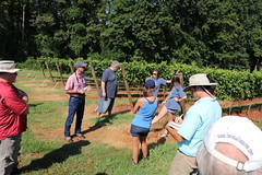 IMG_9117 (UGA CAES/Extension) Tags: vineyard wine winery stonepilevineyard viticulture viticultureteam northgeorgia winecountry ugacooperativeextension uga extension grapes ugaextension cainhickey