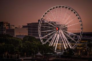 Brisbane - wheel