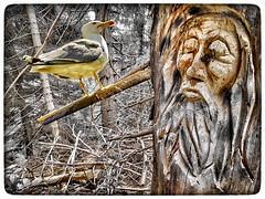 Virtual bestiary (tatianalovera) Tags: italy italia piemonte piedmont trebulina albero foresta bosco forest wood tree seabird seagull uccello bird animale animal bestiary bestia bestiario virtual virtuale