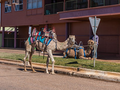 Camels at Australian Hotel Burke St Boulia Queensland P1030409y (john.robert_mcpherson) Tags: camels australian hotel burke st boulia queensland