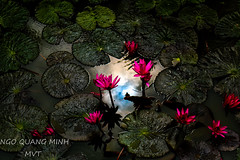 Colors 150 (Minh Ngo Quang) Tags: colors light abstract nature