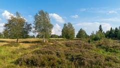 Heidelandschaft (KaAuenwasser) Tags: schwarzwald heidelandschaft heide kniebis hochmoor