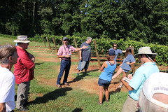 IMG_9120 (UGA CAES/Extension) Tags: vineyard wine winery stonepilevineyard viticulture viticultureteam northgeorgia winecountry ugacooperativeextension uga extension grapes ugaextension cainhickey