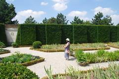 JLF18015 (jlfaurie) Tags: jardin garden bagatelle paris france francia parc parque 22072018 mpmdf jlfr jlfaurie mechas roseraie fleurs roses rosas