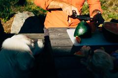 Preparing melons (Fredrik Forsberg) Tags: sweden värmland summer food preparation dog curious sonya7ii brother