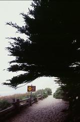 20180724-00016.jpg (tristanloper) Tags: tristanloper creativecommons film nikonf6 california bigsur pacificcoast highway1 pacificocean pfeifferbeach