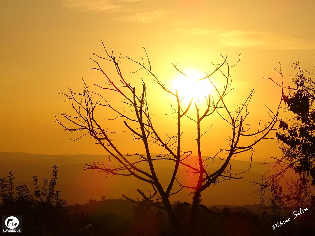 Águas Frias (Chaves) - ... o sol descendo no horizonte por entre os ramos despidos da árvore ...