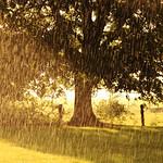 Pluie d'orage thumbnail