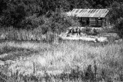 San Andreas, California (paccode) Tags: solemn d850 landscape bushes brush serious quiet stream urban pond california grass abandoned barn monochrome river forest alone farm shack creepy forgotten horse scary blackwhite angelscamp unitedstates us