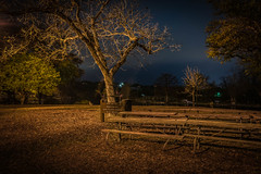 Happy Bench Monday (Jims_photos) Tags: newbraunfelstexas landapark texas trees unitedstates outdoor outside adobelightroom adobephotoshop shadows happybenchmonday jimallen jimsphotos jimsphotoswimberleytexas lightroom landscape txpark benchmonday nopeople nikond750 nightphotos nightshot