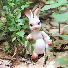 Chamallow [ Coco Riang, Peppi ] (clemychi_doll) Tags: clemychidoll bjd doll balljointeddoll cocoriang peppi bunny