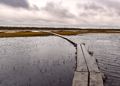 To the land beyond (bogroa) Tags: fantasticnature svamp mash grey arctic finland clouds path water mood